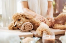 Grooming a Dog is as simple at Doral