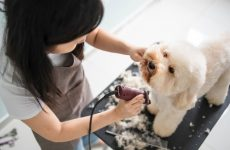 Hire the services without any obligations from Pet groomer fort Lauderdale.